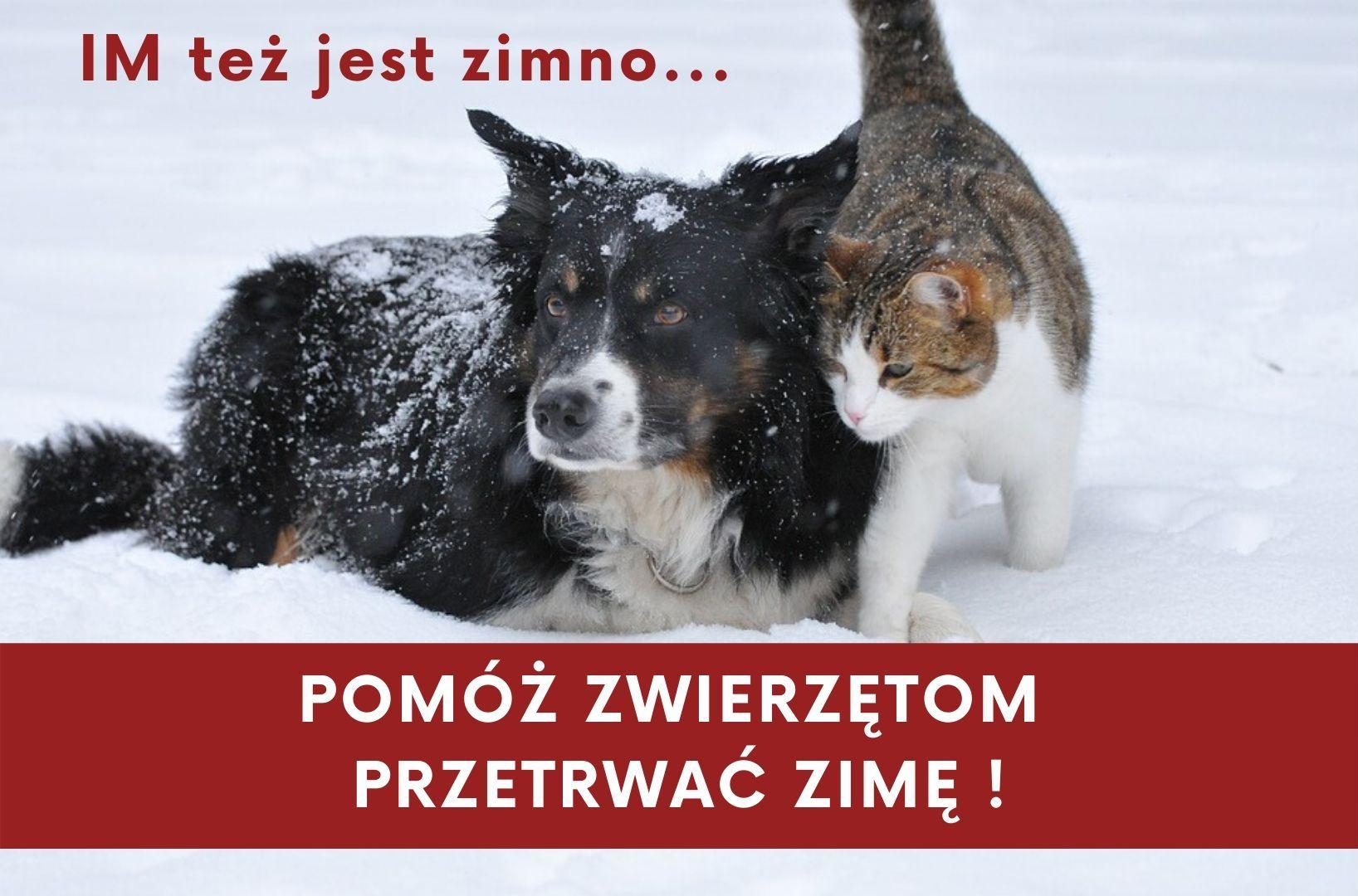 Zimowa pomc zwierzętom