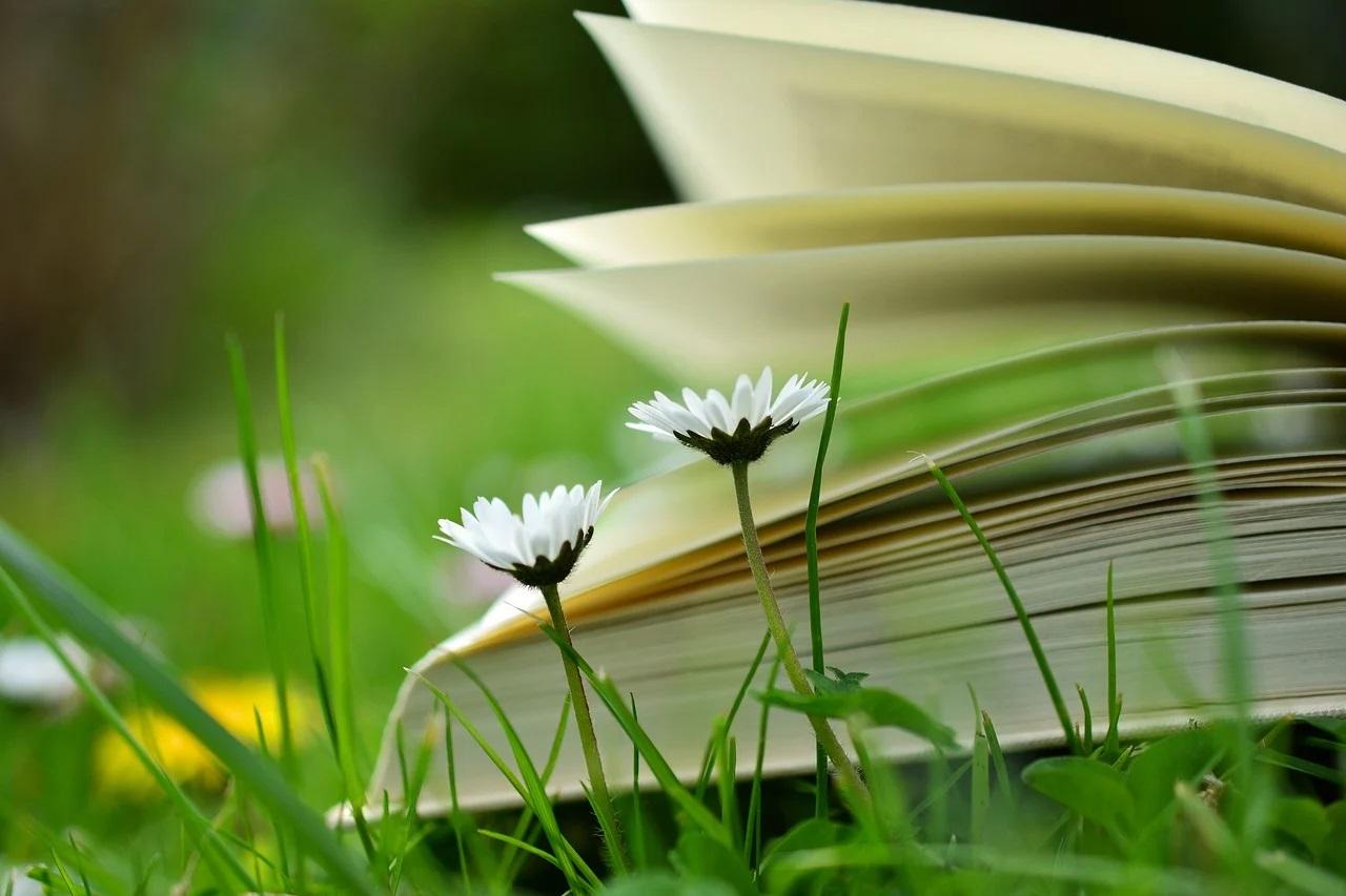 otwarta książka na trawie