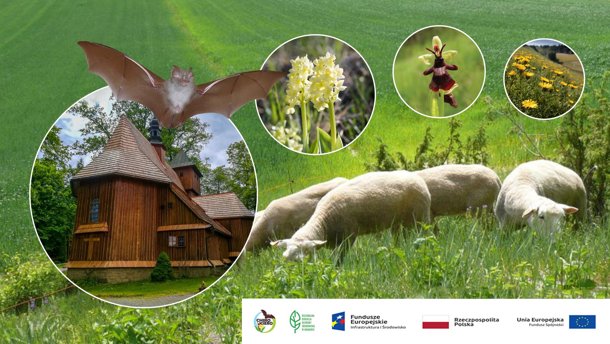 baner RDOS Kraków przedtawiający rosline, kościół drewniany i owce na łące