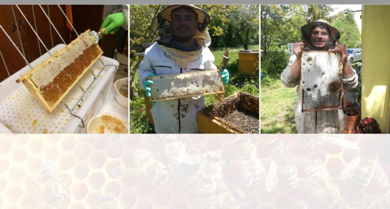 Ramka z miodem. Pszczelarz przy ulach trzyma ramki pokazując co się na nich znajduje.