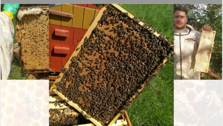 Ramka z ula z pszczołami.