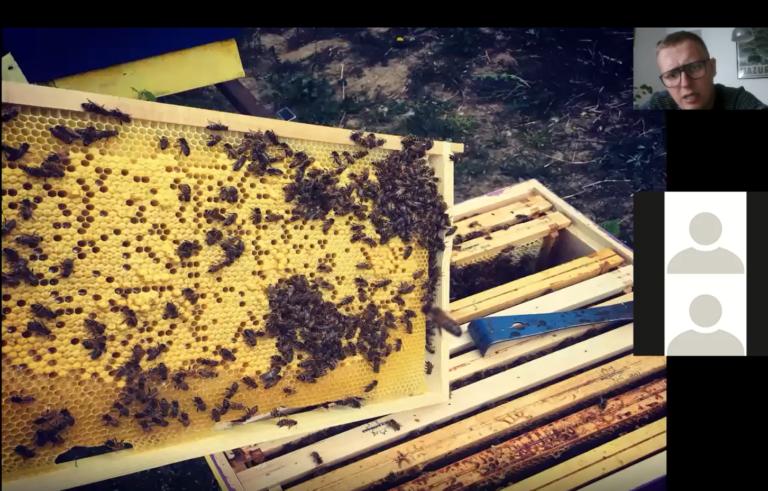 Ramka wyciągnięta z ula z pszczołami i miodem.
