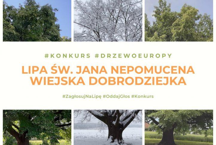 plakat zapraszający do wzięcia udziału w głosowaniu, drzewa w tle.